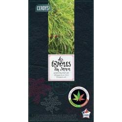 Acer palmatum 'viridis' c3l